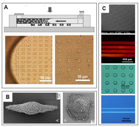Microfluidics - Substrate physical patterning
